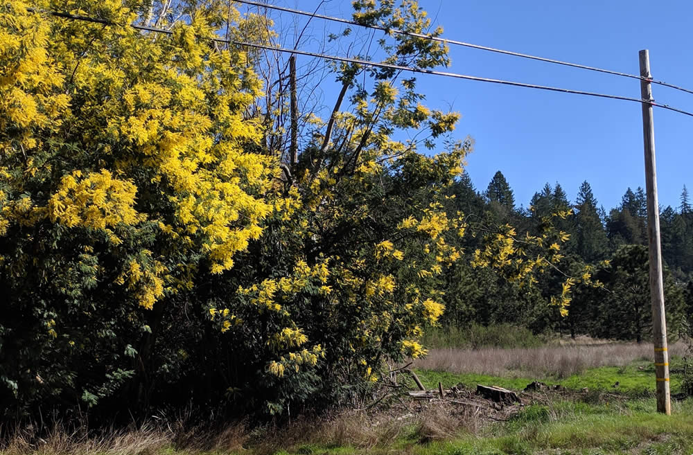 Invasive Non-Native Plants